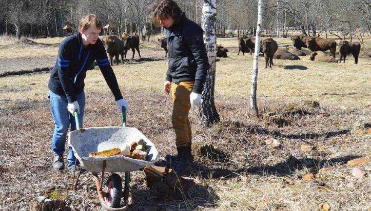 Добровольцы развесили в брянском лесу домики для летучих мышей