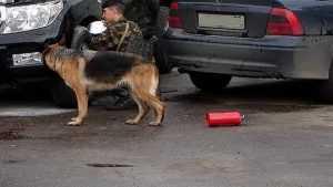 Брянск снова напугали сообщением о бомбах