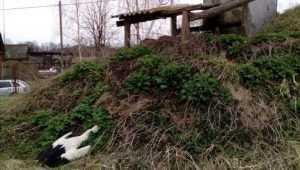 В брянском селе дикари расстреляли аистов