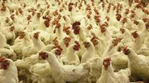 Россия вдвое увеличила экспорт мяса из-за спроса в Азии