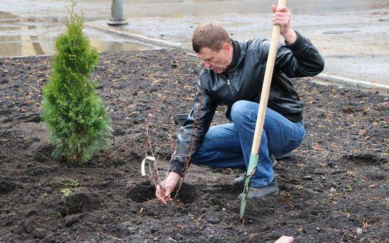 В Брянске чиновники и труженики нефтепровода посадили туи и барбарис