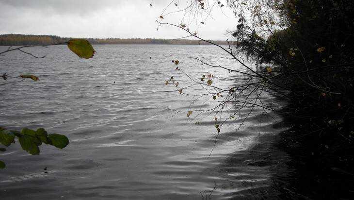 Для очистки белобережского озера брянцы запустят малька белого амура