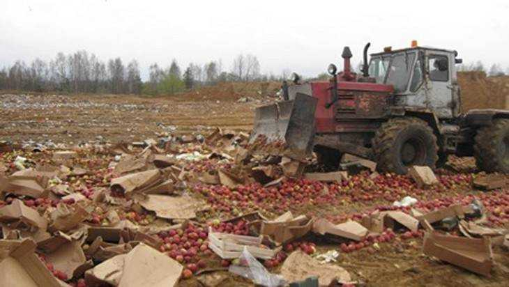 В Брянской области раздавили трактором 9 тонн овощей и фруктов
