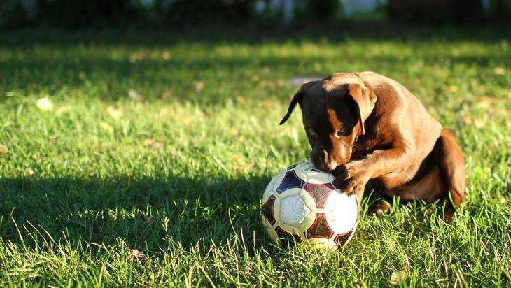 В Новозыбкове брянская полиция запретила футбольный матч за суперкубок
