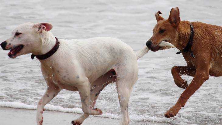 Руководителей районов Брянска накажут за незаконный выгул собак