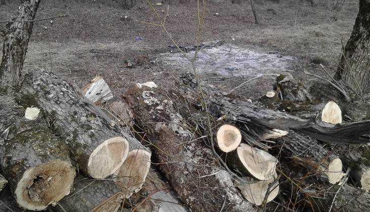 В Брянске на улице Флотской варварски спилили деревья