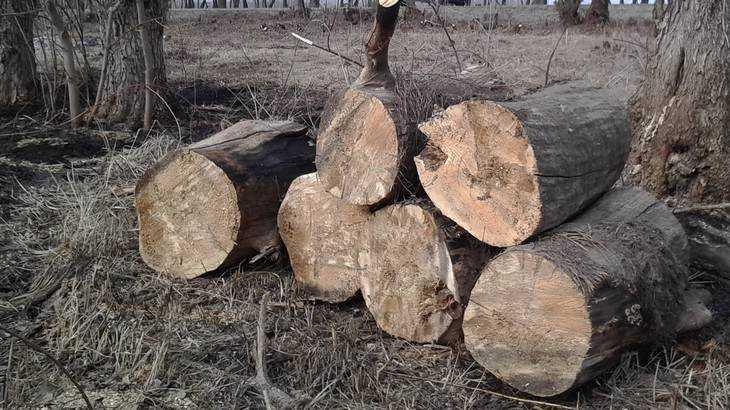 Жительница Брянска: Нас вырывают с корнями