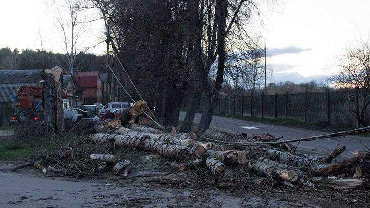 В Брянске порыв ветра повалил на дорогу тополь и столб с проводами