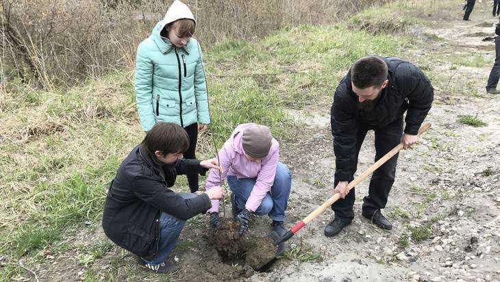 В День Земли брянские чиновники и лесники высадили дубовую аллею