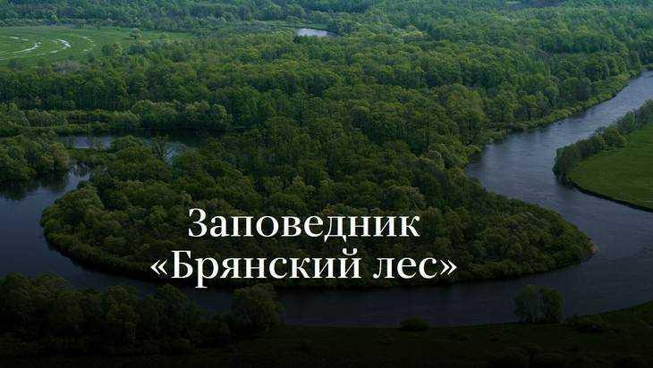 Агентство «Новости» посвятило статью заповеднику «Брянский лес»