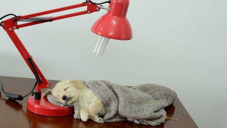 В Брянске приют для бездомных животных примет 710 собак