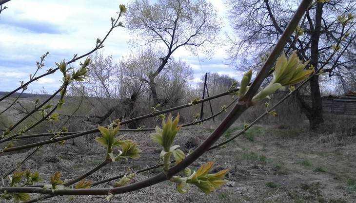 В Брянской области объявили штормовое предупреждение на 26 и 27 апреля