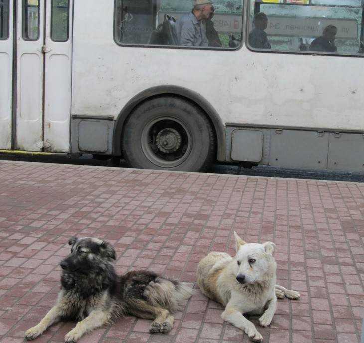 Жители Новозыбкова пожаловались на своры бродячих собак