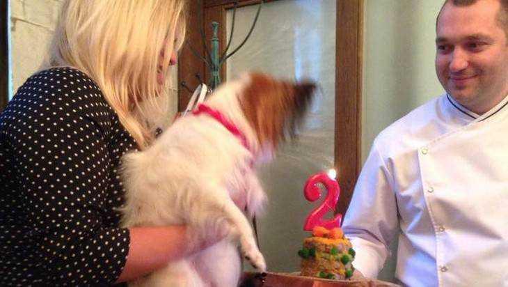 В Брянске опровергли известие о собачьем празднике в ресторане