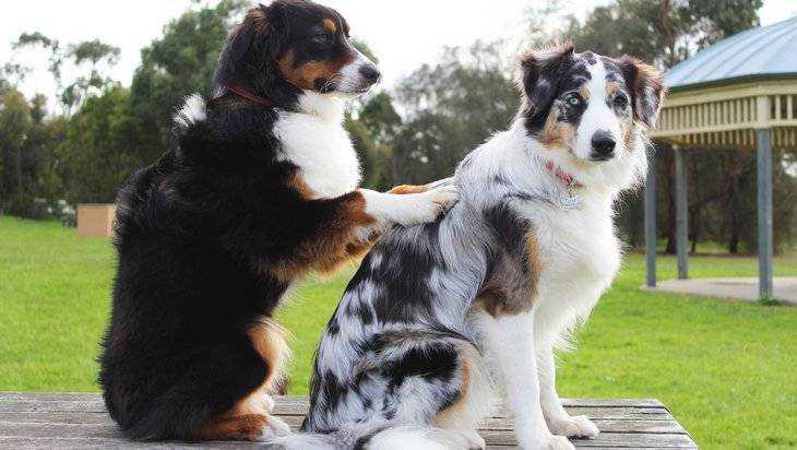 Госдума ужесточит наказание за жестокое обращение с животными
