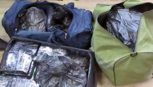 В Брянской области украинец попался на контрабанде ошейников от блох