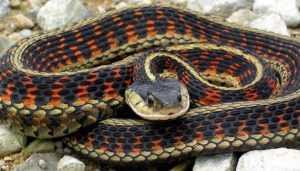 В Новозыбкове 9-летний мальчик попал в реанимацию после укуса змеи