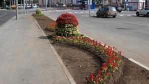 Площадь у железнодорожного вокзала Брянск-I украсили шарами из цветов