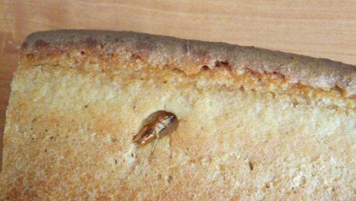Брянцев возмутил купленный в магазине хлеб с тараканами