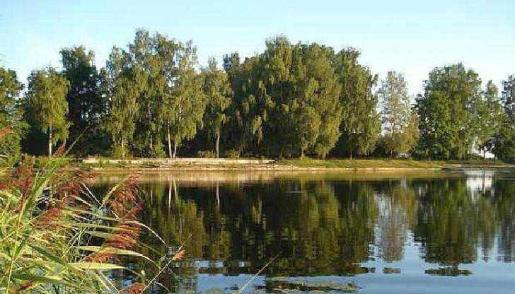 В Брянске строителям многоэтажки велели выпустить в реку Десну 68 тысяч рыб