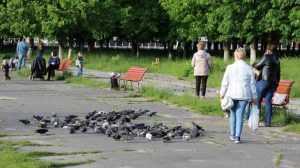 Архитекторы заявили, что храм в Пролетарском сквере украсит Брянск