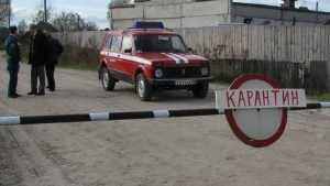 К границе Брянской области подобралась сибирская язва