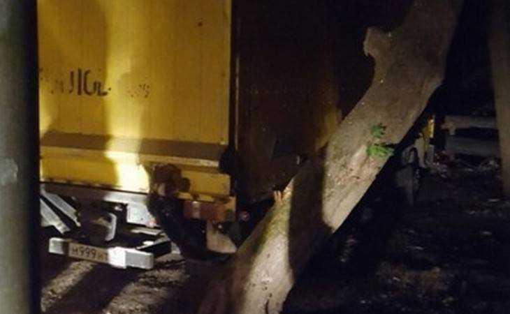 В Брянска на Бежицкой ночью спилили деревья