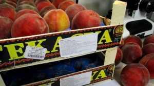 Брянские инспекторы вернули в Турцию 17 тонн зараженных персиков