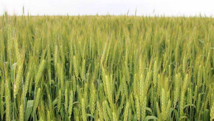 Брянские аграрии получат удобрения из первых рук