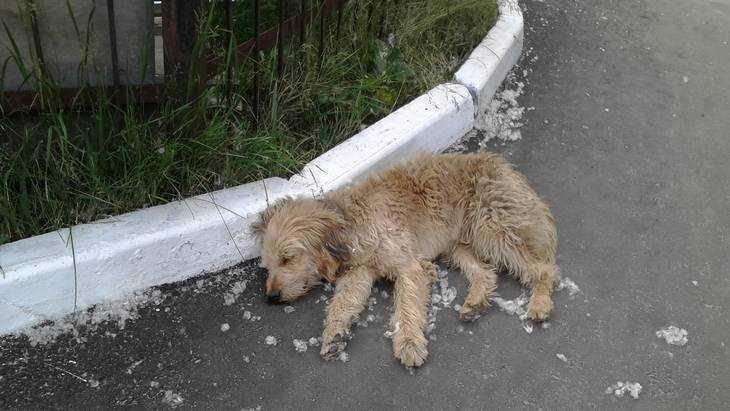 На двух девушек в Брянске на Кургане набросились восемь злобных собак