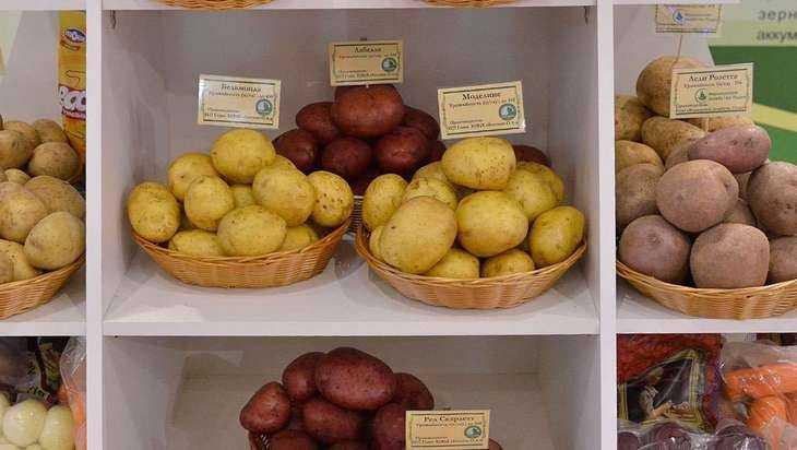Полтора десятка вагонов брянской картошки купили Чили и Бразилия