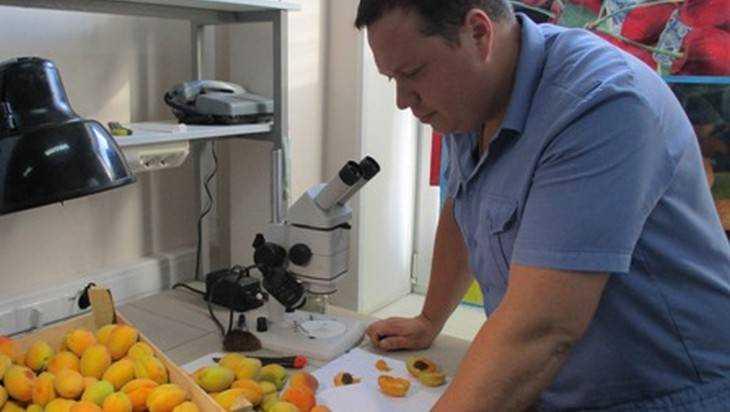 Брянские инспекторы вернули в Молдавию 19 тонн зараженных абрикосов