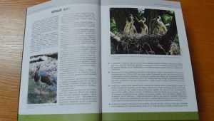 Брянских птиц собрали в одну книгу