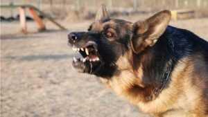 В Брянске оштрафовали хозяина собаки, покусавшей мужчину