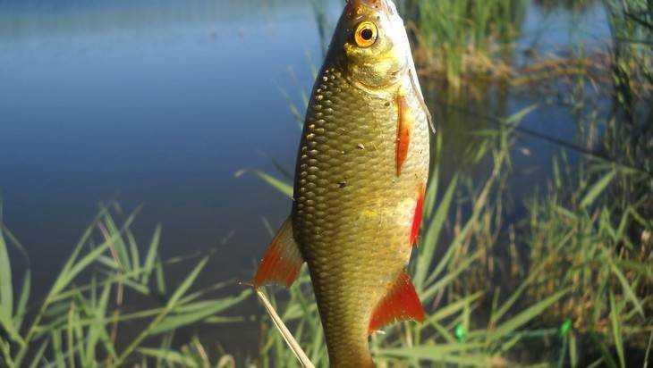 Брянцев пригласили на захватывающую рыбалку