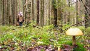 Пропавшего в лесу калужского грибника нашли в Брянской области