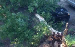 В Брянске рухнувшее дерево раздавило дорогую иномарку
