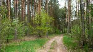 Брянские лесники за 3 года отсудили 15 гектаров леса у химического завода