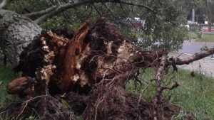 Гроза оставила Новозыбков без света и повалила множество деревьев