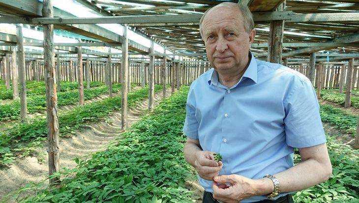 Брянская «Опора России» поможет уникальному женьшеневому хозяйству