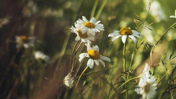 В Брянской области на неделю установится теплая и сухая погода