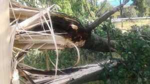 В Новозыбкове начали восстанавливать разрушенные ураганом кладбища