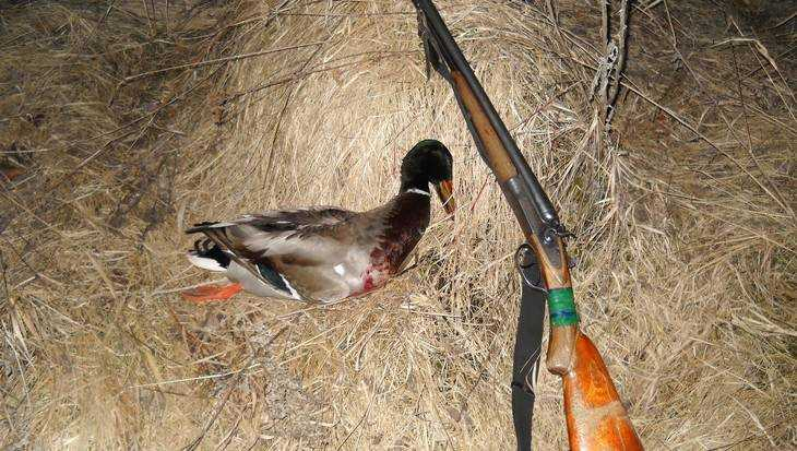 В Брянской области 12 августа откроют осеннюю охоту