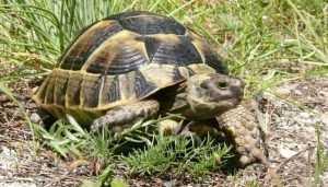В Брянске прокуратура и суд защитили краснокнижных черепаху и тритона