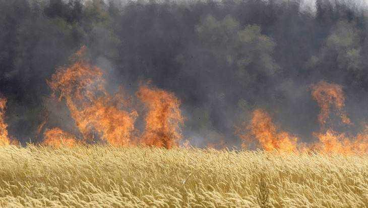 Брянские пожарные спасли поле с урожаем