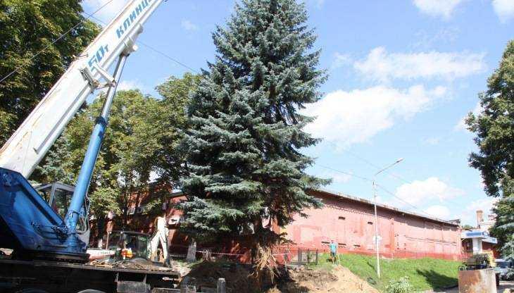 Власти Брянска объяснили уничтожение 18-метровой ели у Винного замка