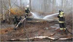 В брянском селе 45 спасателей сразились с торфяным пожаром