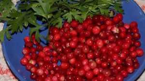 Жительница брянского поселка установила мировой рекорд по сбору ягод