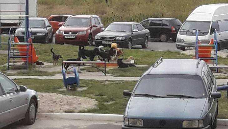 В Брянске на проспекте бродячие собаки захватили детскую площадку
