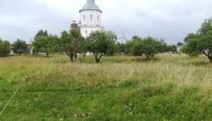 У брянцев попросили помощи в посадке яблоневого сада возле Свенского монастыря